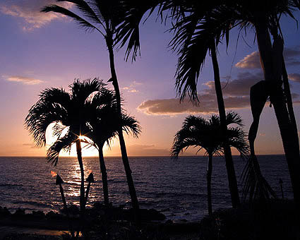 Silohuetted Palm Trees in front of Purple Sky